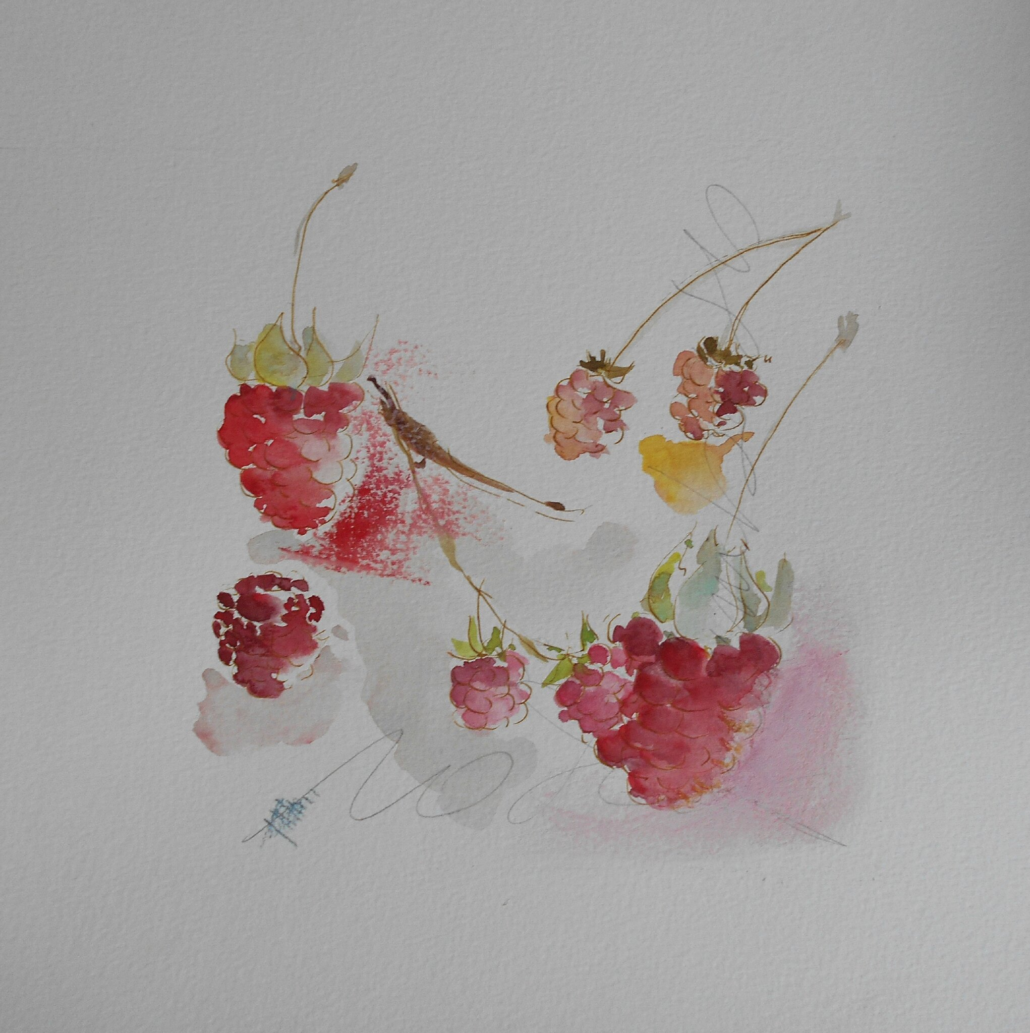 dessins aquarellés fruits tous les messages sur dessins