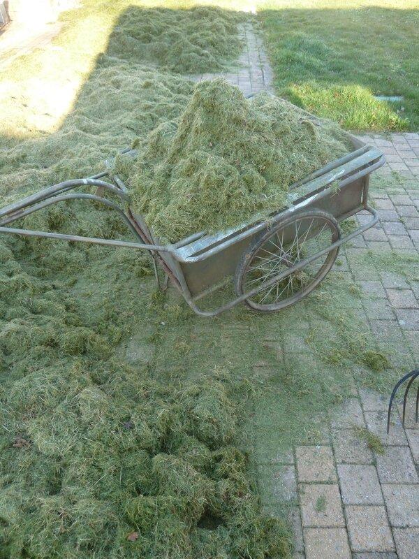 10-herbe paillage (11)