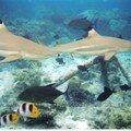 Des requins que l'on pourait presque toucher