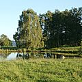 Une petite ballade sur le plateau des mille étangs