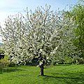 Le printemps est déjà là !!