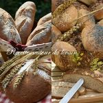concours_levain