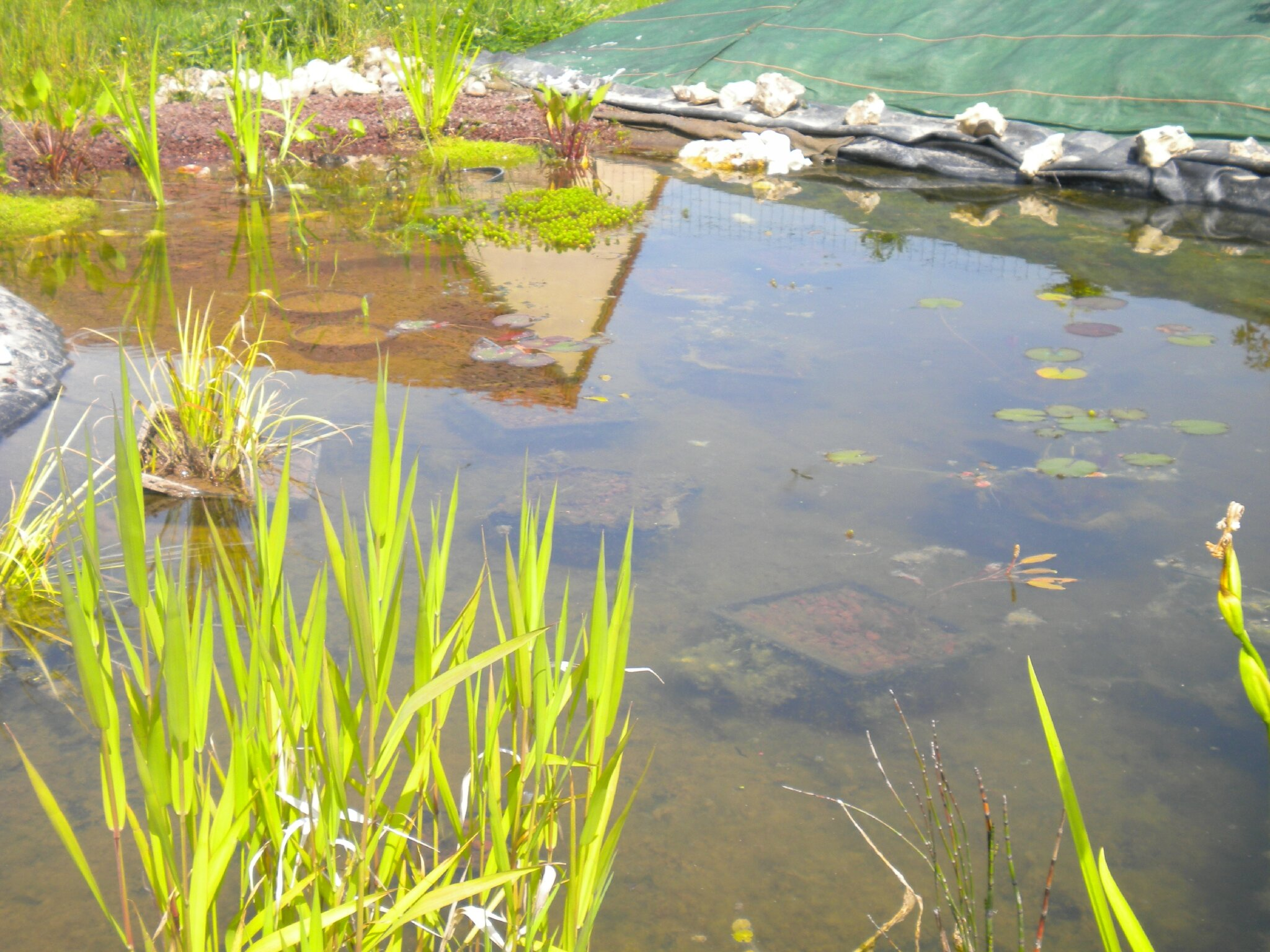 Le bassin juin 2013 notre jardin ecologique for Toile bassin