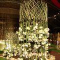 cascade sur fleurs d'Amaryllis blanche superbe !!!