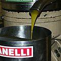 L'olive: du fruit à l'huile