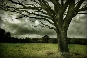 The_Crone_Tree_by_NakedYank