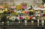 Marché aux fleurs 3