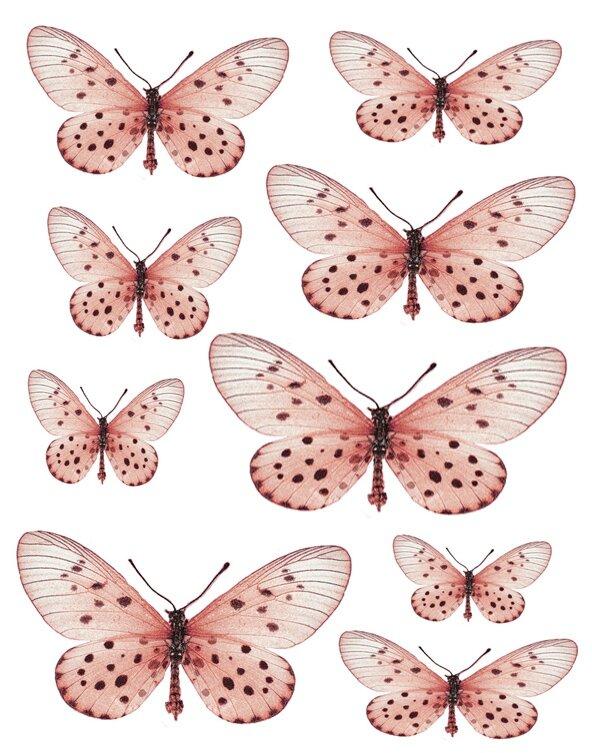 1341600733_55_FT838_websters_butterflies_pink_sm