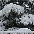 Un parc sous la neige à Burgaronne...