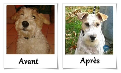 DOG CHRIS AVANT APRES01