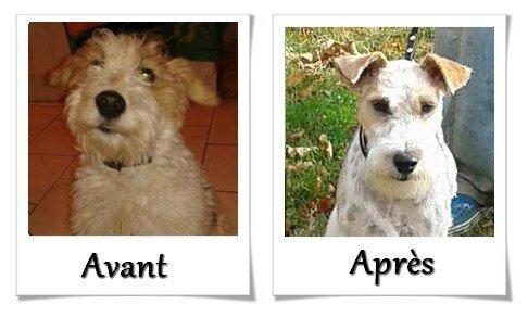 DOG CHRIS AVANT APRES01