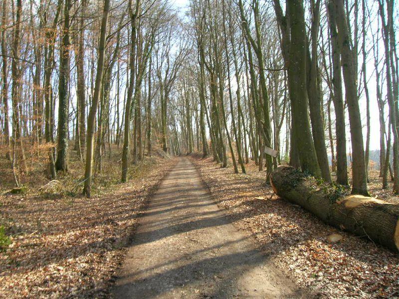 A4 - Le chemin dans les bois