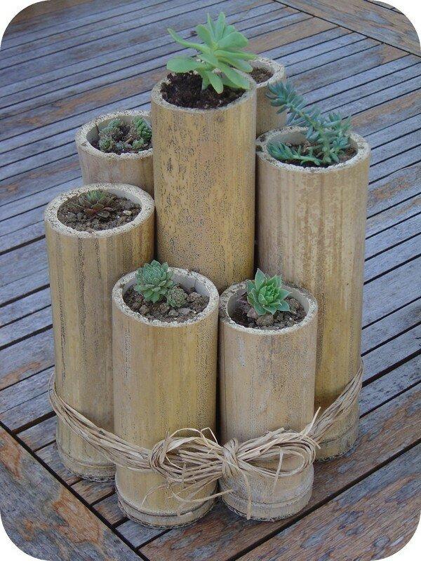 bambou 1 les cactus et moi alors dans tout a. Black Bedroom Furniture Sets. Home Design Ideas