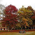 Vielle automne 2410159