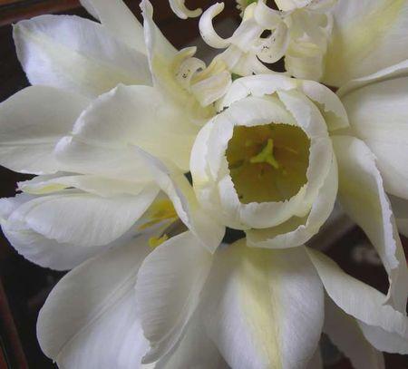 TulipesBouquet3_8