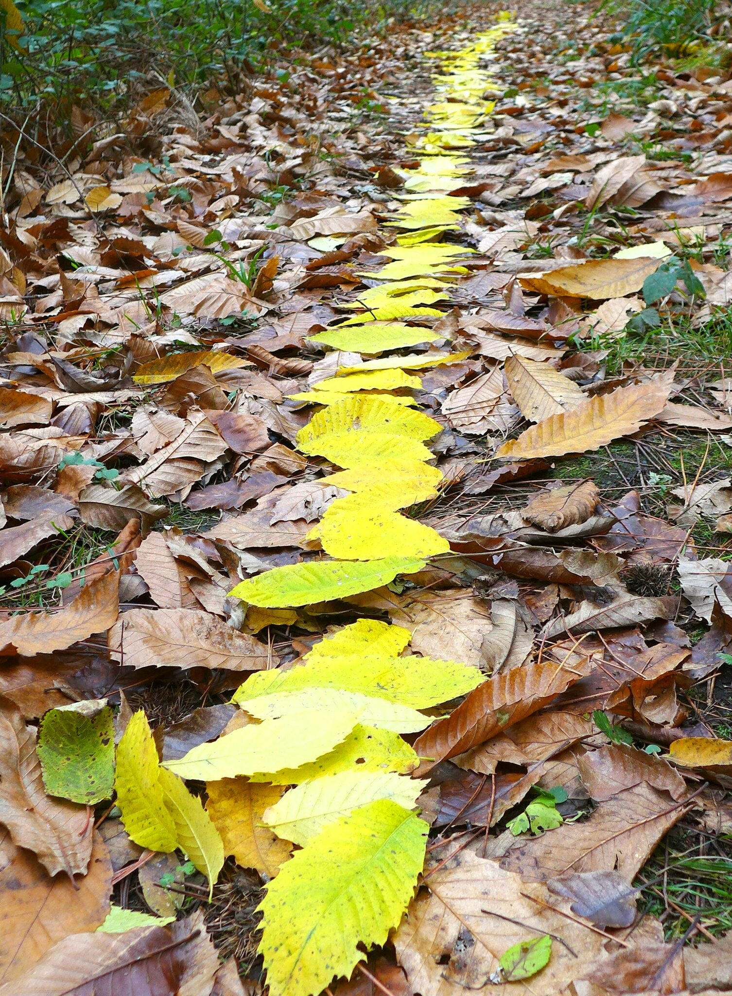 cheminer sur les feuilles mourantes yurtao