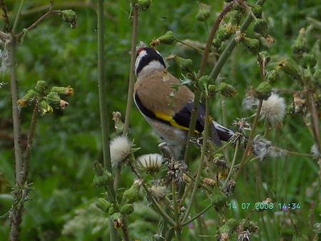 nature__oiseau_JUILLET_2009_021