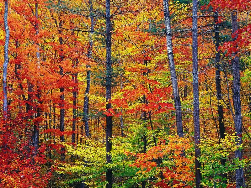 1280px-New_hampshire_colors