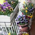Un p'tit air de printemps souffle au balcon...