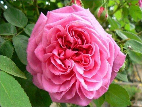 fleur 24