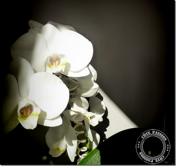 creapassion orchidblack