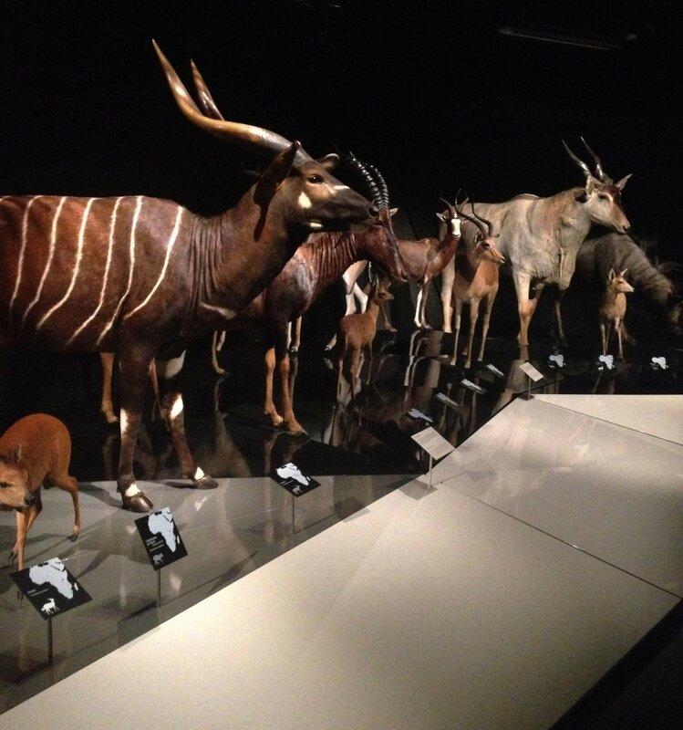 7-ouverture musee des confluences-Lyon