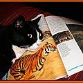 Chat contre tigre - Aujourd'hui c'est moi le plus gros - Comparaison félins
