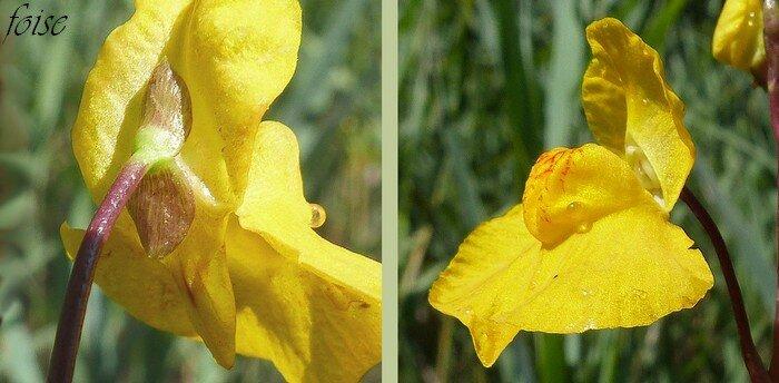 détails de la fleur