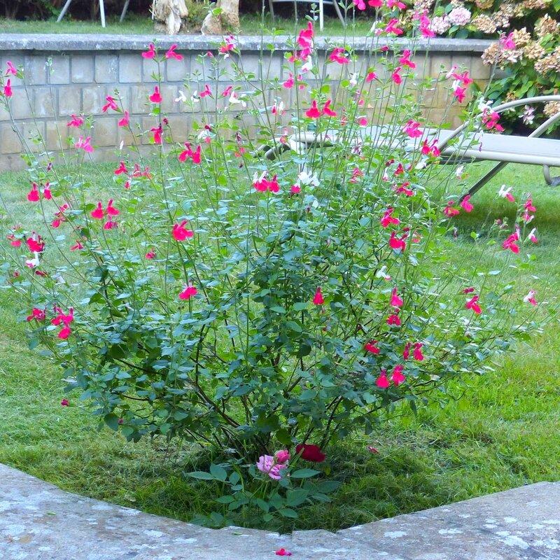 ma maison mon jardin le 11 septembre 2016 (14)