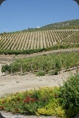 Symington-Graham-Porto-Douro-76_thumb[3]