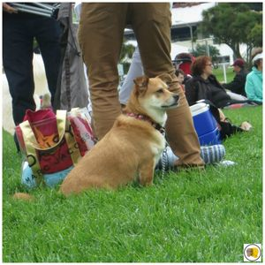 Off the Grid - Picnic at the Presidio (50)