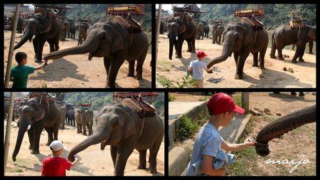elephant_12