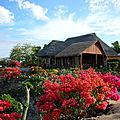 TANNA Vanuatu
