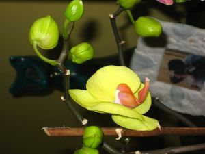 orchidées_1032