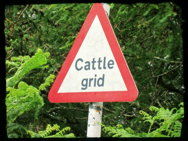 ecosse road cattle grid