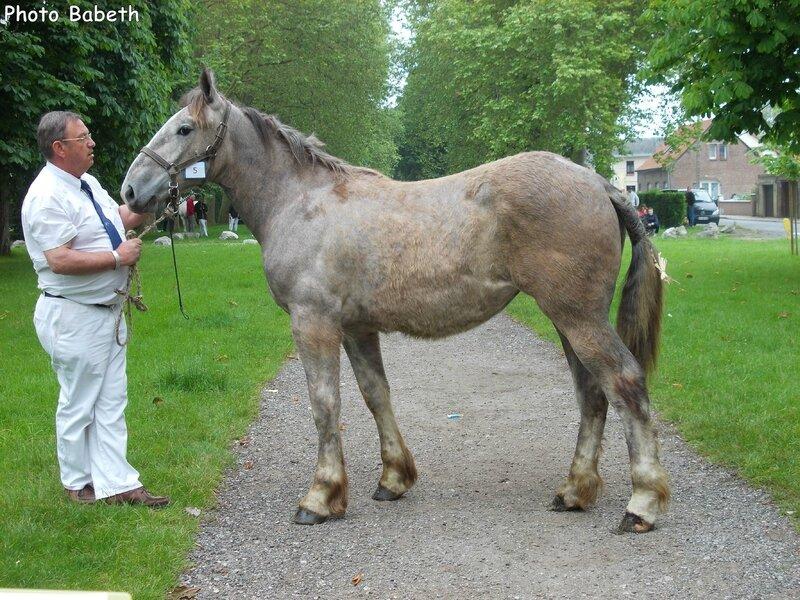 Dora de la Côte - Concours élevage local - Rue (80) - 1er Juin 2014 - 5e