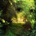 J'aime me cacher dans la forêt