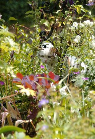 jardin_chat_3
