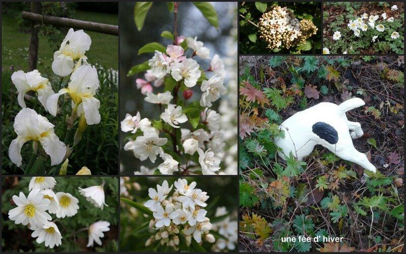 Mon jardin 19 mai 20111