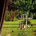 Windows-Live-Writer/jardin_D005/DSCF3916