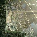 toiles d'araignées_1
