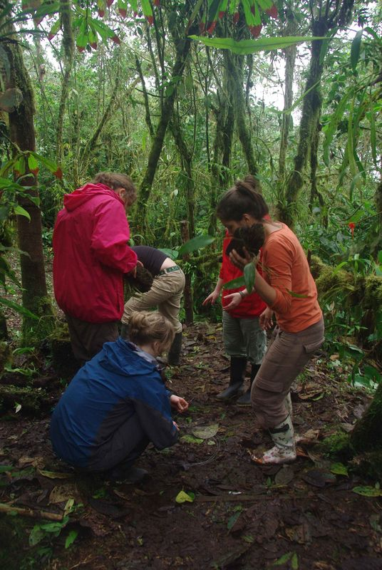 Travail des volontaires dans l'orchidarium