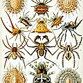 L'araignée, une prédatrice habile et rusée