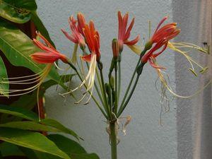 J_aime_les_fleurs__je_vous_les_offre