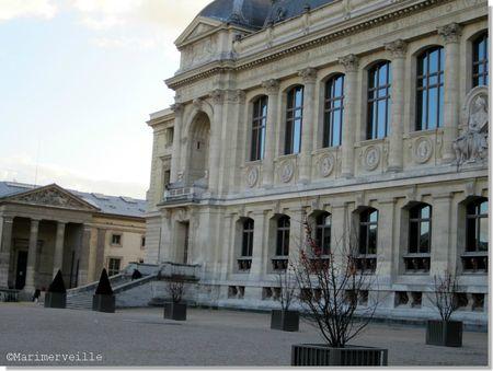 Muséum d'histoire naturelle paris