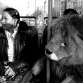 The joy of meeting a lion on a tram