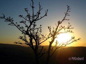 arbre_collines_crepuscule