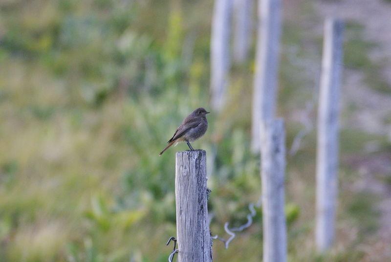 Petit oiseau photo de rencontre avec les chamois for Petit oiseau avec houpette