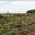 IMG_8003 m (Large)