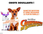 concours_chihuahua